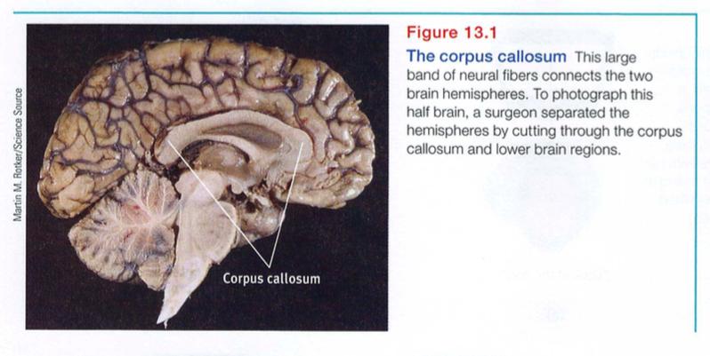Ap Psychology Module 13