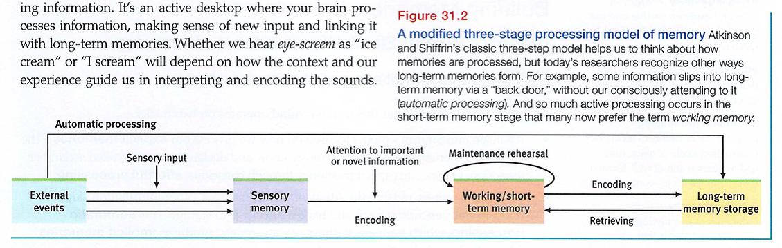 Effortful Processing Psychology